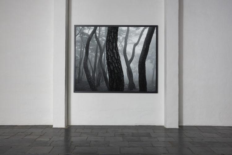 Installation view of Bae Bien-U's Antwerp exhibition (2014)